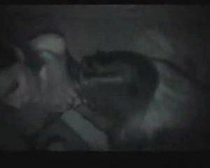 Twee pijpende bisex meiden in het donker