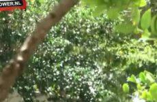 Stiekem wordt de tippelaar gefilmt tijdens het pijpen